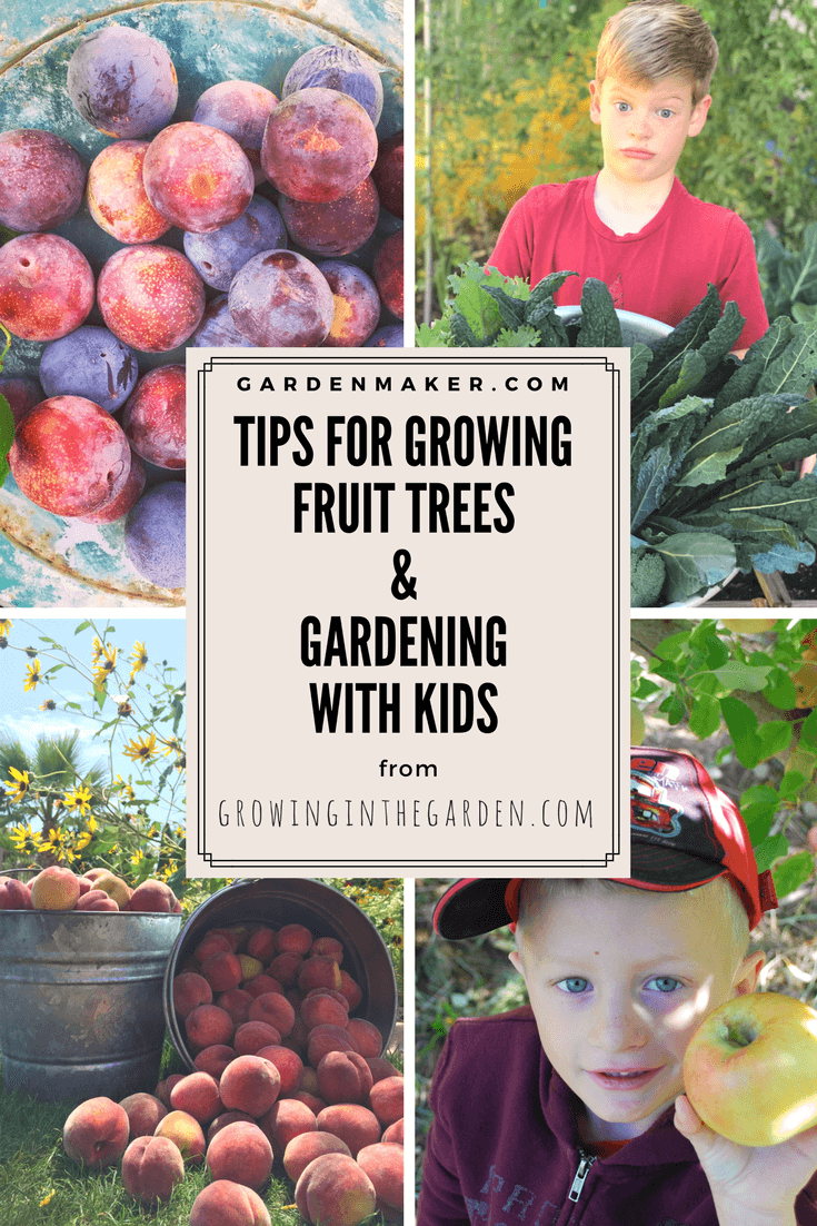 What Are Some Of The Most Important Things To Consider When Growing Fruit Trees What Have You Found To Be Growing Fruit Trees Gardening For Kids Growing Fruit