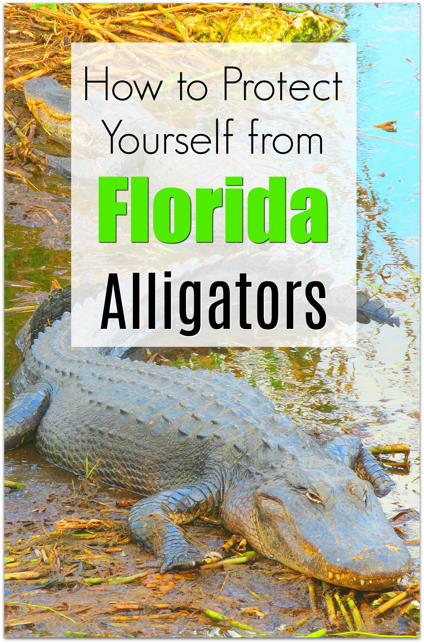 How to Protect Yourself from Alligators in Florida is part of How To Protect Yourself From Alligators In Florida Kim And - How do you protect yourself from an alligator attack in Florida  It's a question most are wondering after the tragic attack of a toddler by an alligator at Disney World  Are the waterways in Florida safe  What should Orlando and Florida area vacationers know  The Gator Facts Alligators live in fresh and brackish (mix of [   ]