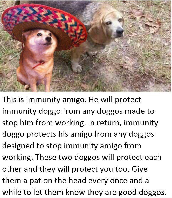 Image result for immunity dog Dogs, Immunity cat, Immunity
