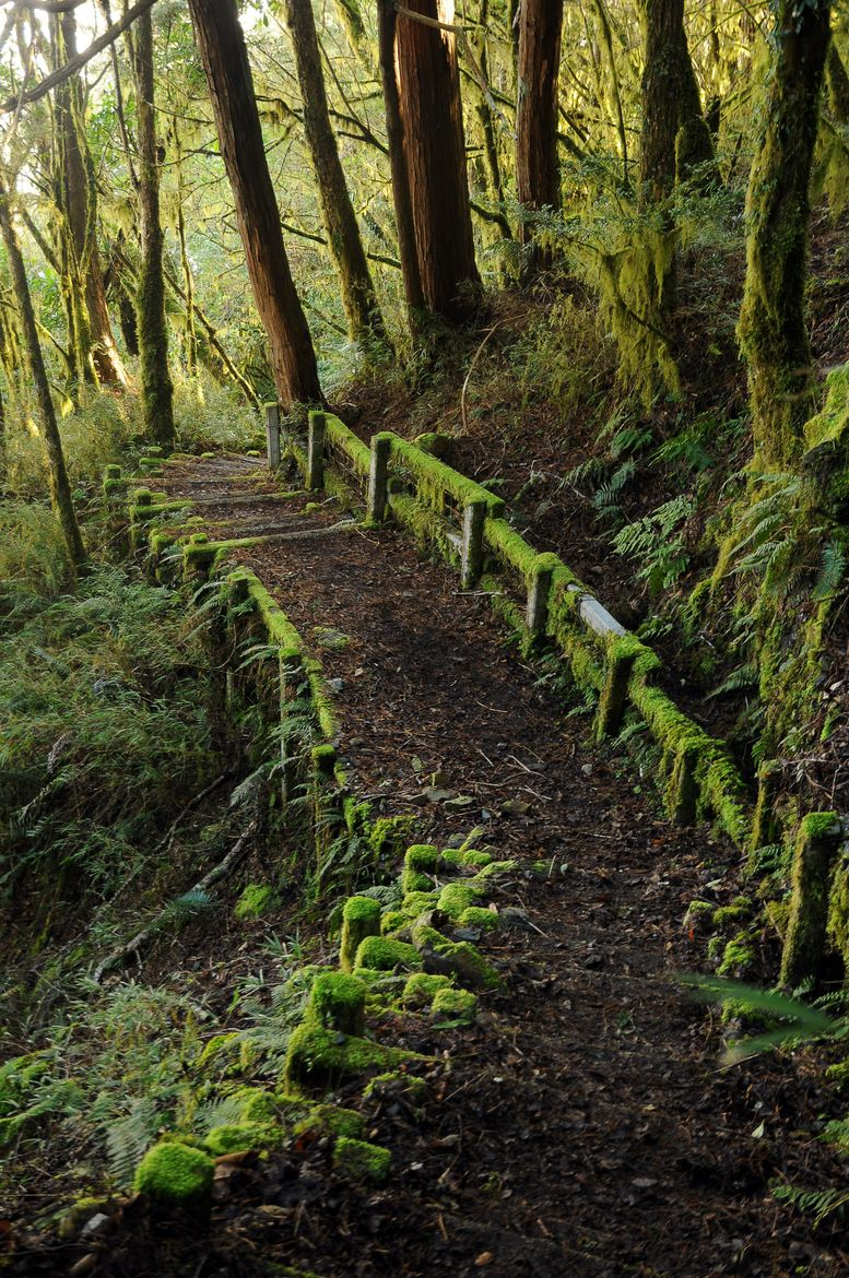 The Steps in Forest Nature Pic #8 Mossy path, hiking through Pocket Wilderness or Falls Creek Falls