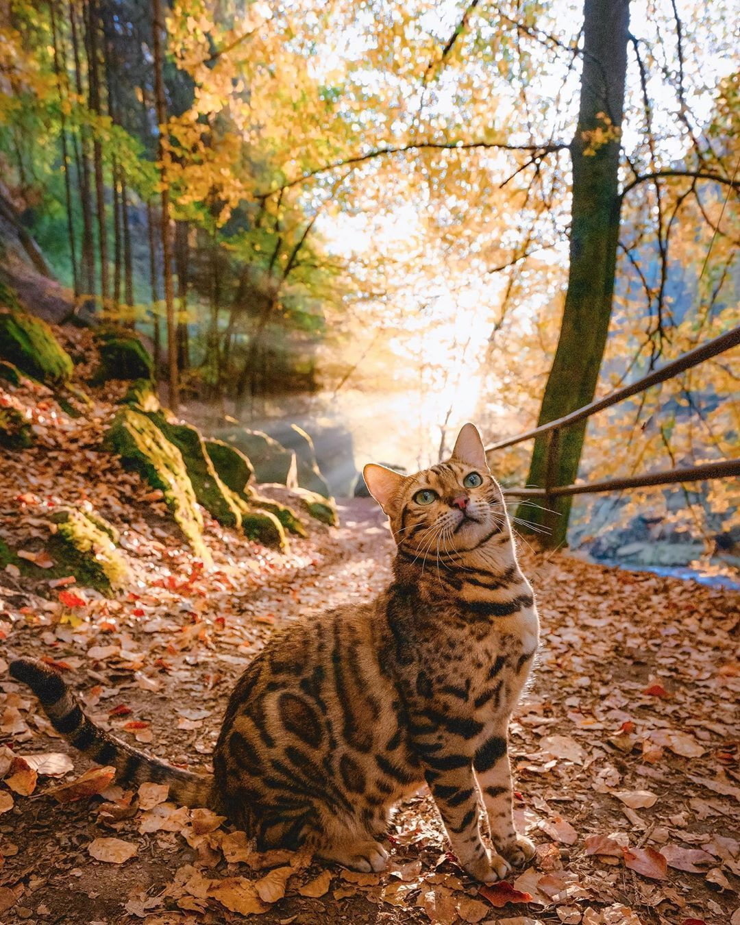 New post on everythingfox in 2020 Bengal cat personality