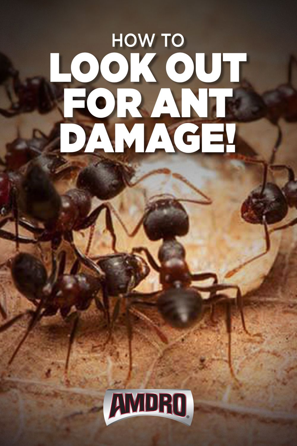 Pin on Ants Control