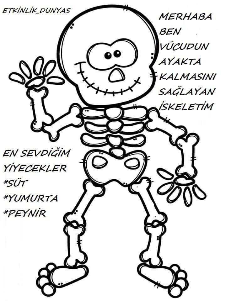 Basak Unluer Ozberk Tarafindan Iskelet Sistemi Organlar