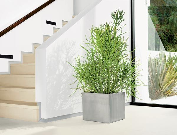 Choose fun varieties: Houseplants aren\'t all green and leafy. Some ...