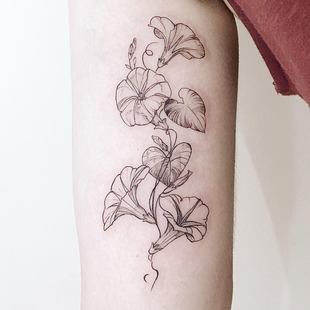 Morning Glories Thank You Julia And I M Really Sorry About This Indoor Lighting Situation Thro Birth Flower Tattoos Flower Vine Tattoos Aster Flower Tattoos