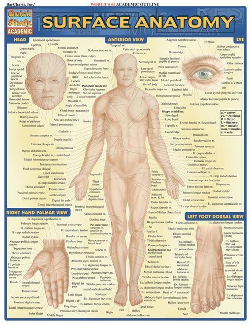 Surface Anatomy Anatomy Nursing Books And Free Education