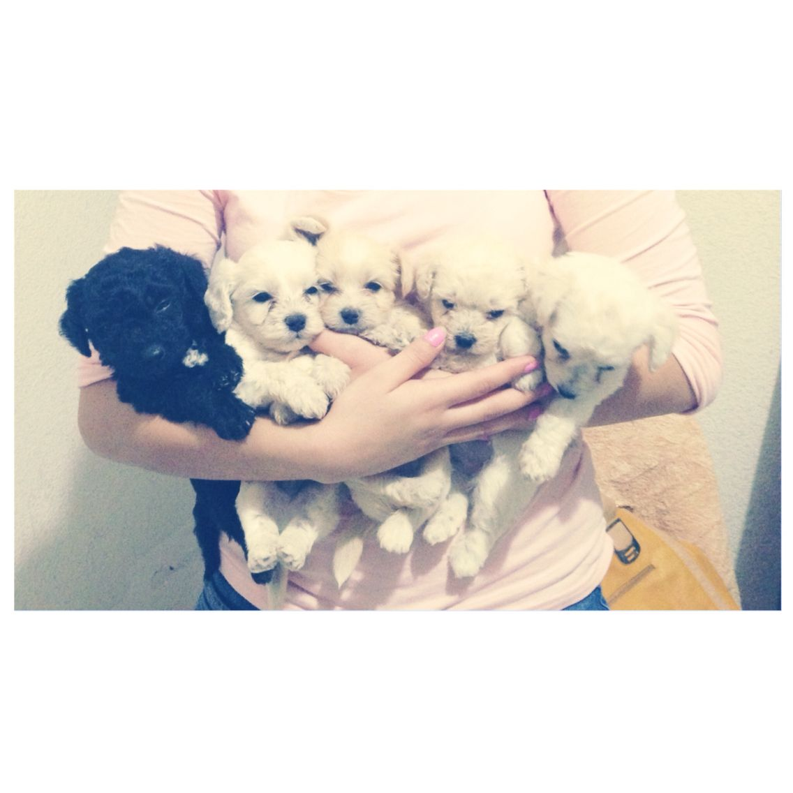 Little dogs...I LOVE THEM!!!!!