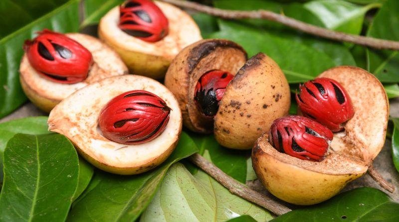 Muskatnuss Kostbare Natur Naturkuche Krauterkuche Einfache Gerichte