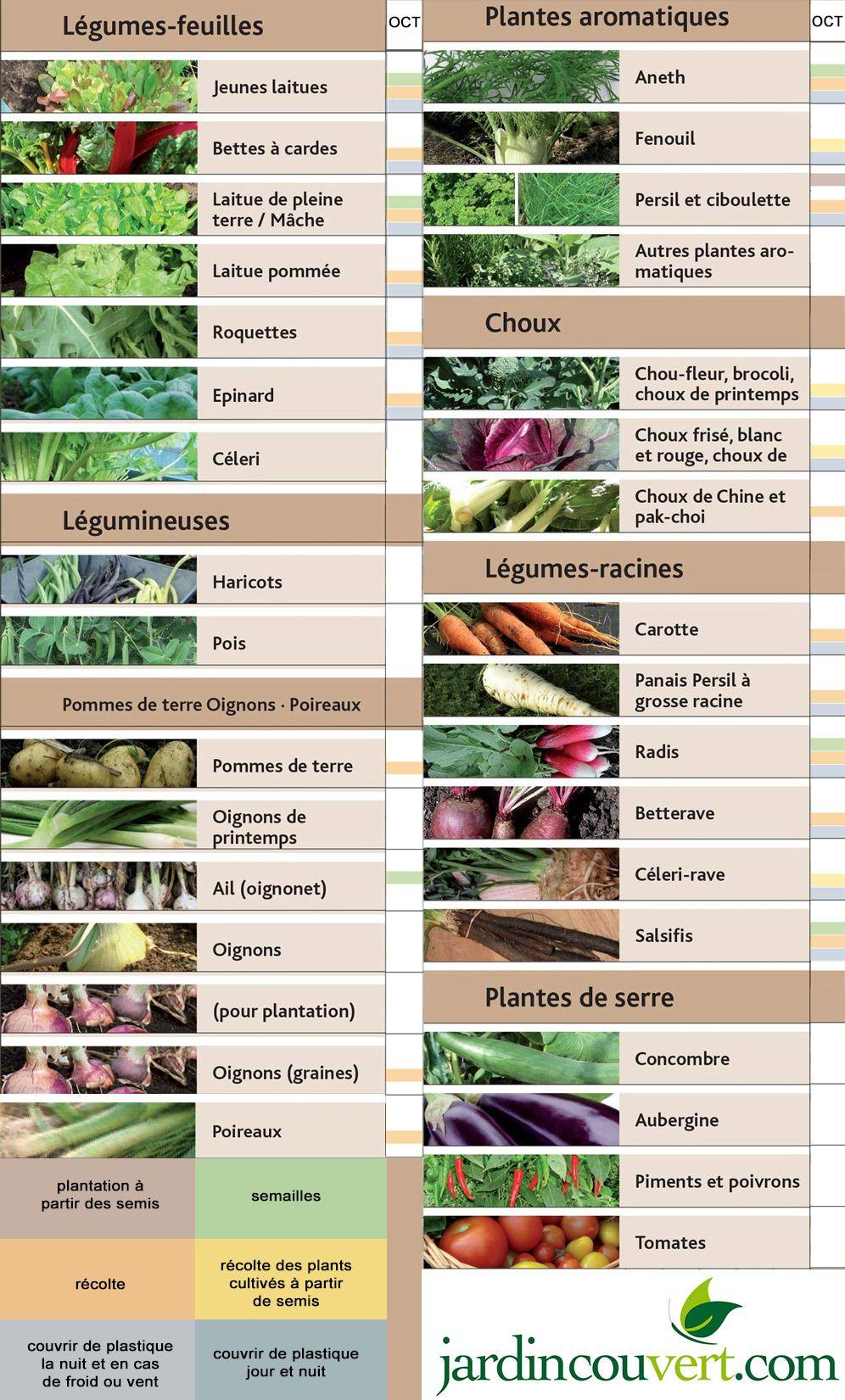 Que Planter En Octobre Sous Serre potager en octobre : nos astuces et conseils de fabricant de