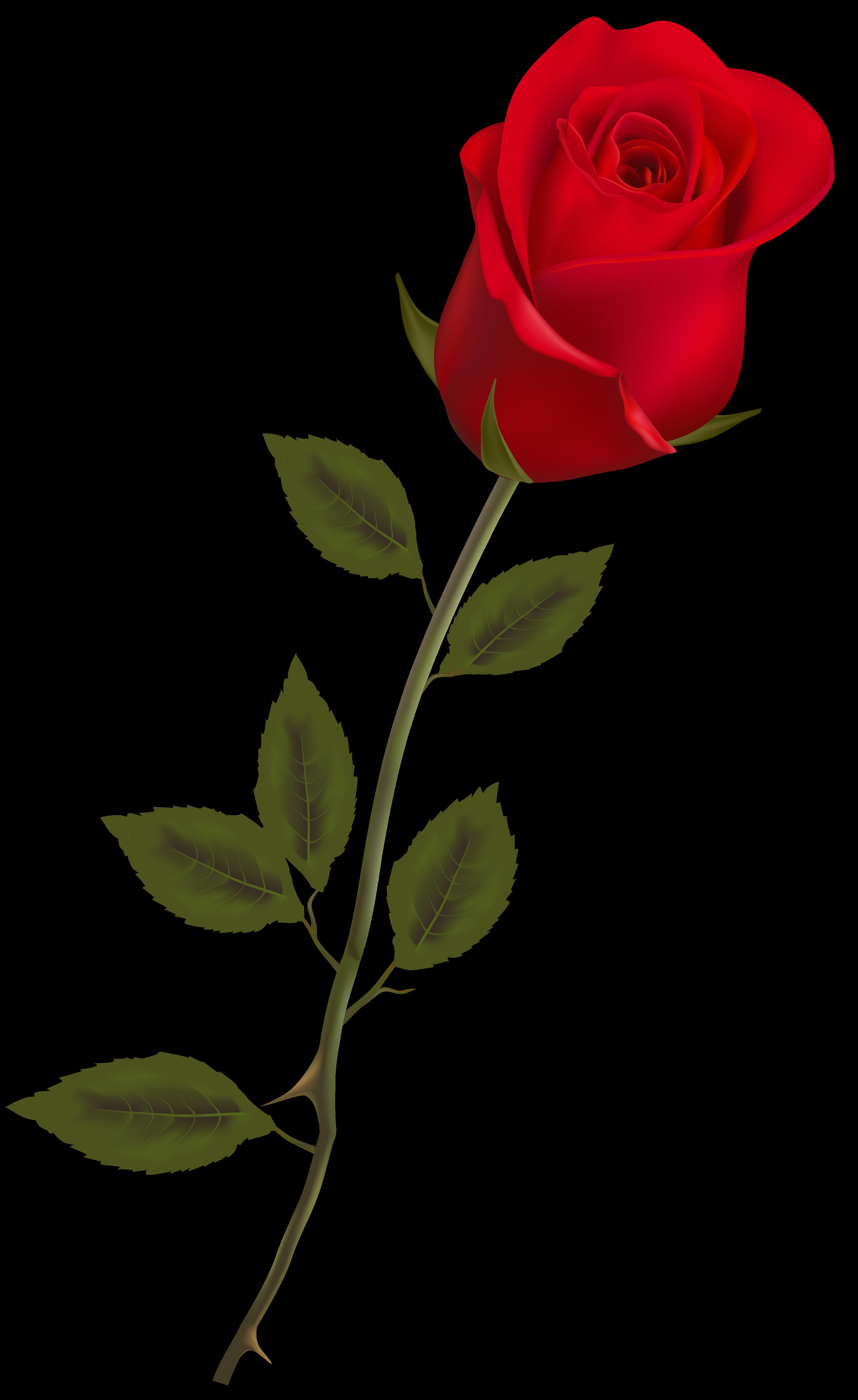 Pin De Manisha K Em Png Vectors Manisha Rosas Vermelhas Flor De Jardinagem Belas Flores