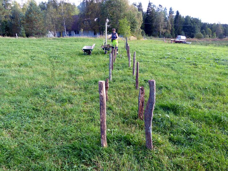 permakultur – Östängs gård