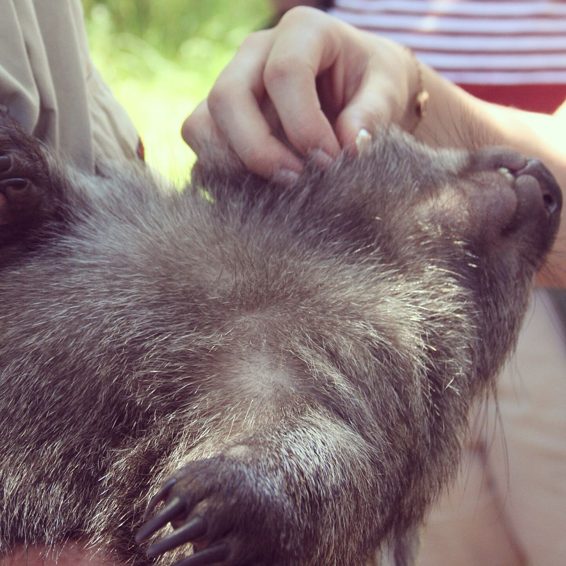 Sophia the Wombat living the dream.