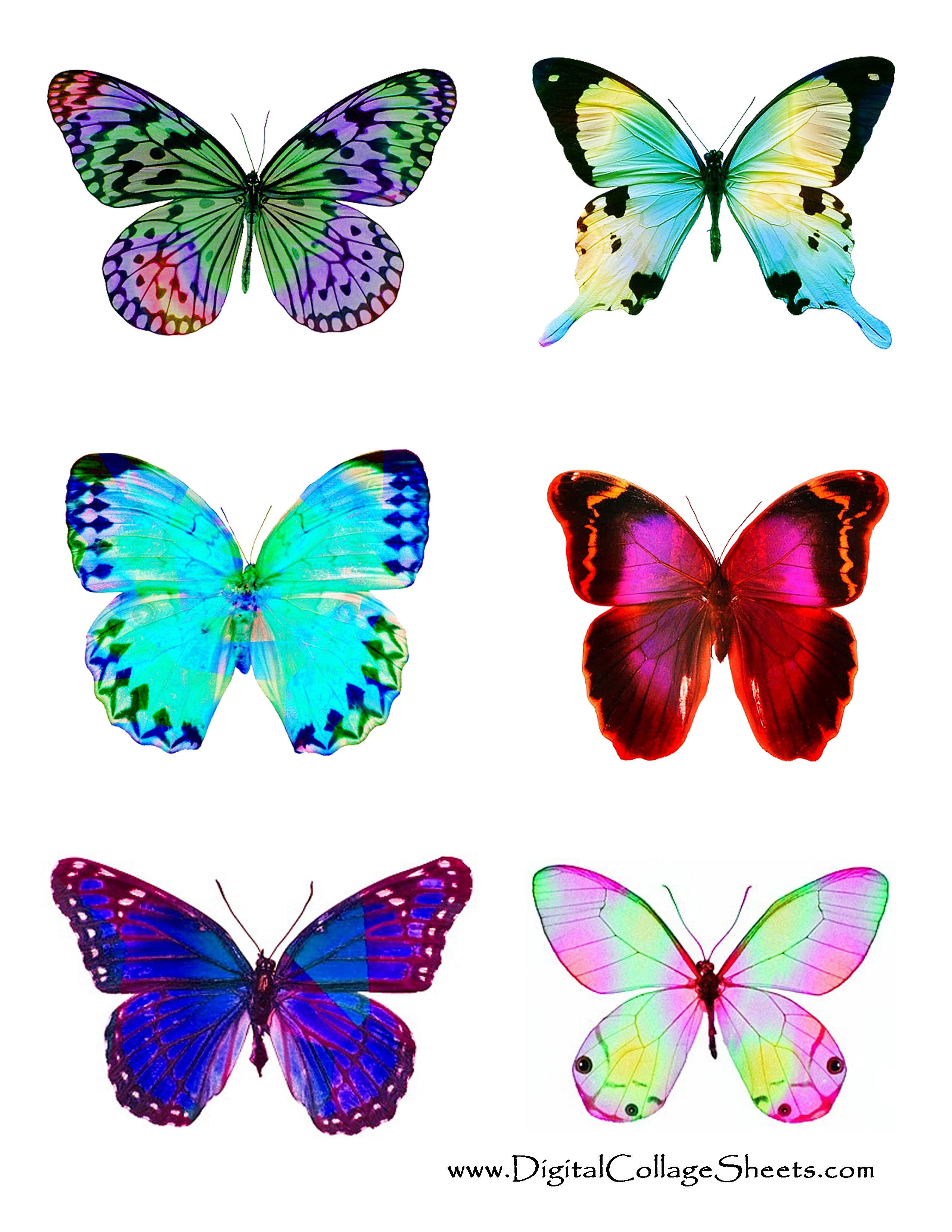 Colored Butterfly Template Printable