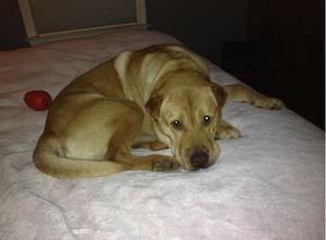 Adopt Bosco On Petfinder Notfall