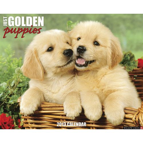 Just Golden Puppies Wall Calendar Whoever Said You Can T Buy