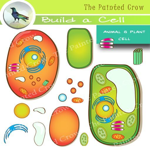 Animal Cell Plant Cell Clip Art 30 Piece Set Color Blackline Graphics Animal Cell Plant Cell Cell Model Project