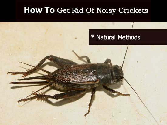 10 ways of getting rid of stink bugs silience noisy - How to get rid of stink bugs in garden ...
