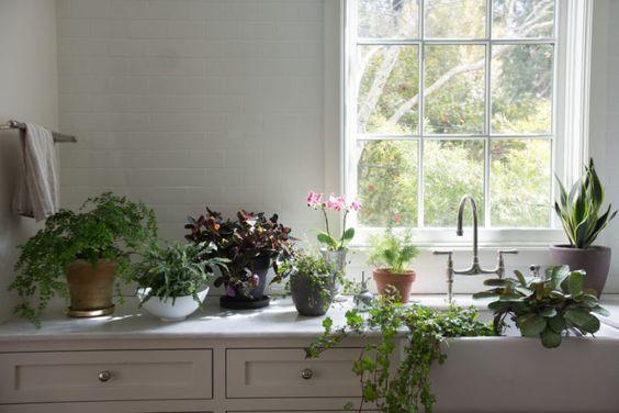 Best Houseplants: 9 Indoor Plants for Low Light | Low lights ...