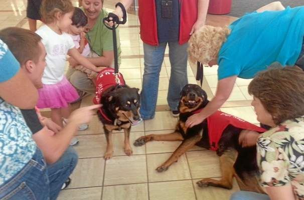 Rescue Dogs Come To The Rescue In Lax S Pup Therapy Program Rescue Dogs Dogs Pup
