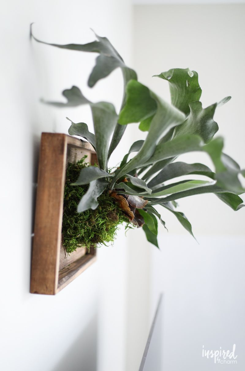 Learn How To Make This Diy Mounted Staghorn Fern