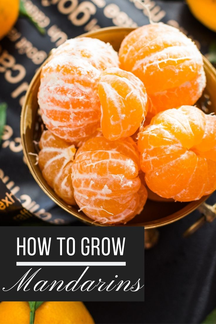 Photo of How to grow a mandarin from seed