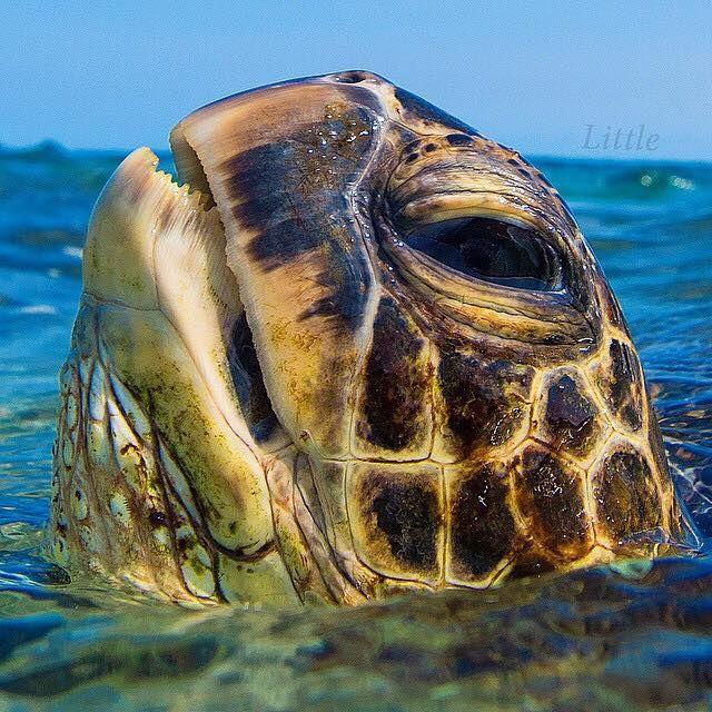 Mobile Uploads Florida Salt Life Facebook Sea Turtle Ocean