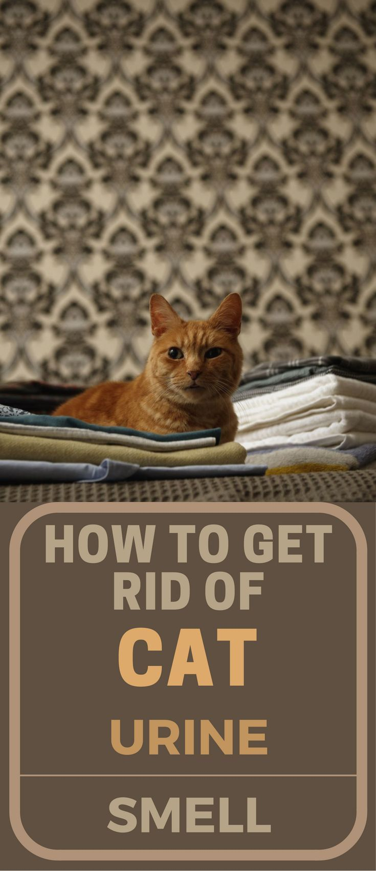 How to get rid of the smell of cat urine