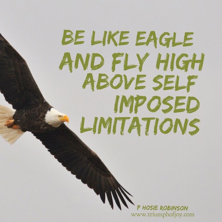 You Can T Soar Like An Eagle If You Re Surrounded By Pigeons Who Do You Hang Out With Cross River Bald Eagle Eagle