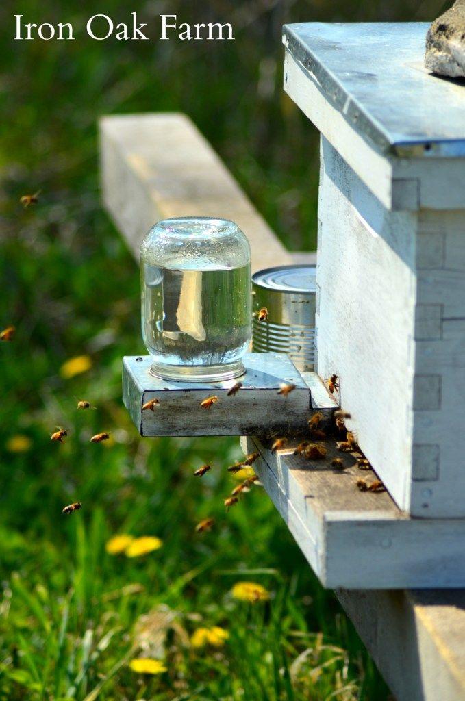 Beekeeping for Beginners   Bee keeping, Backyard bee ...