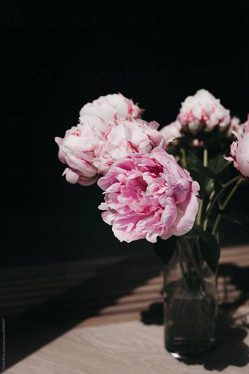 A Vase Of Pink Peony Flowers By Cindy Prins Flower Peony Peony Flower Flower Aesthetic Flower Phone Wallpaper Fantastic flower vase wallpaper images