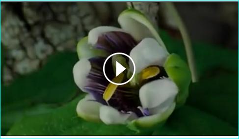 Een mooie zondag gewenst! https://www.facebook.com/jeaime.roses/videos/10150401727279020/?pnref=story https://www.facebook.com/annemieke.hoek