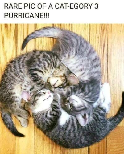 Funny Cat refrigerator magnet 3 1/2 x 3 1/2   eBay