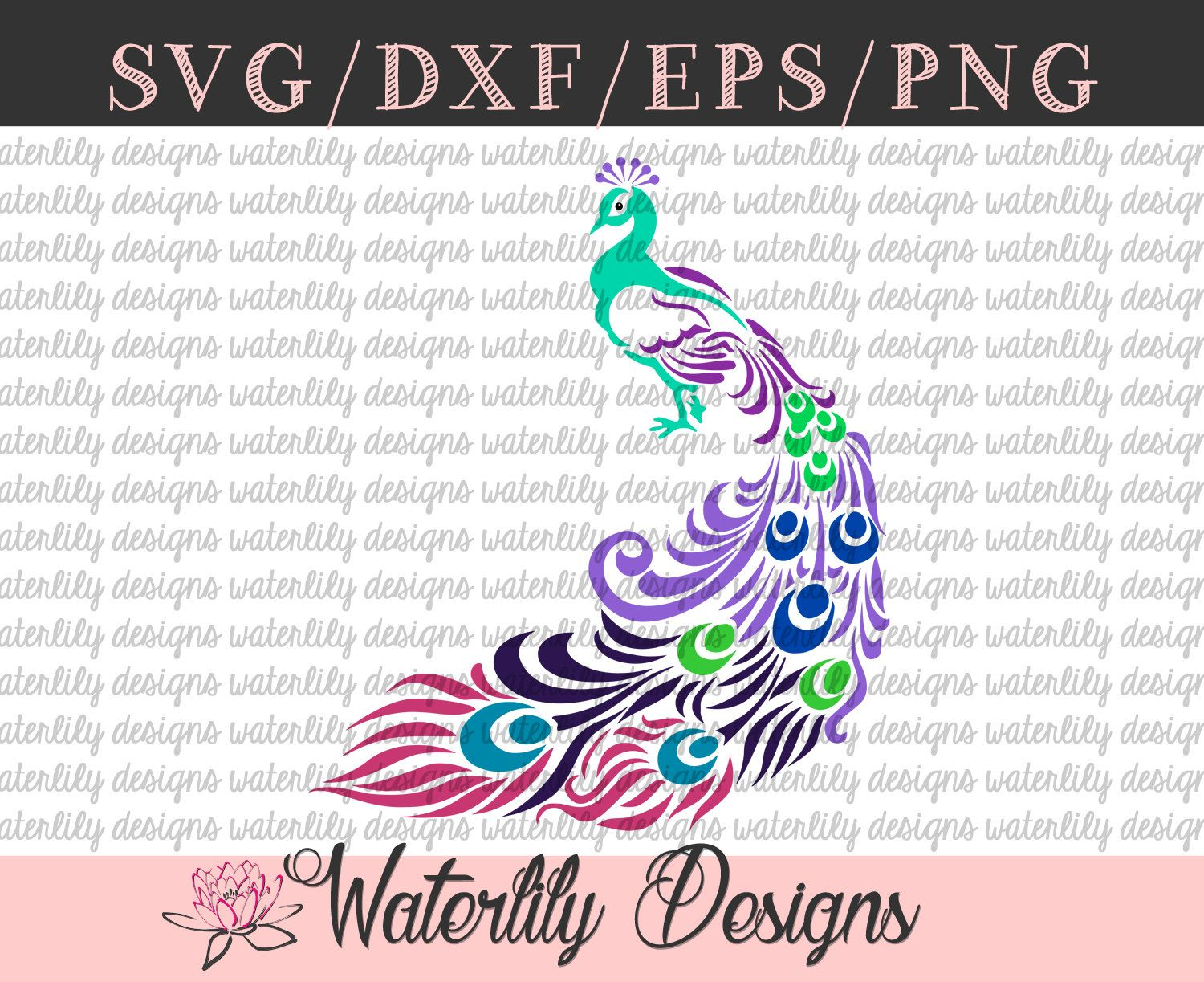 MultiColor Swirly Peacock SVG Instant Download Vector