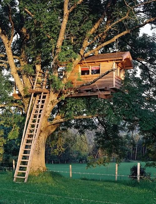 Insane Tree Houses ladder treehouse in a huge tree, creating works of art and beauty