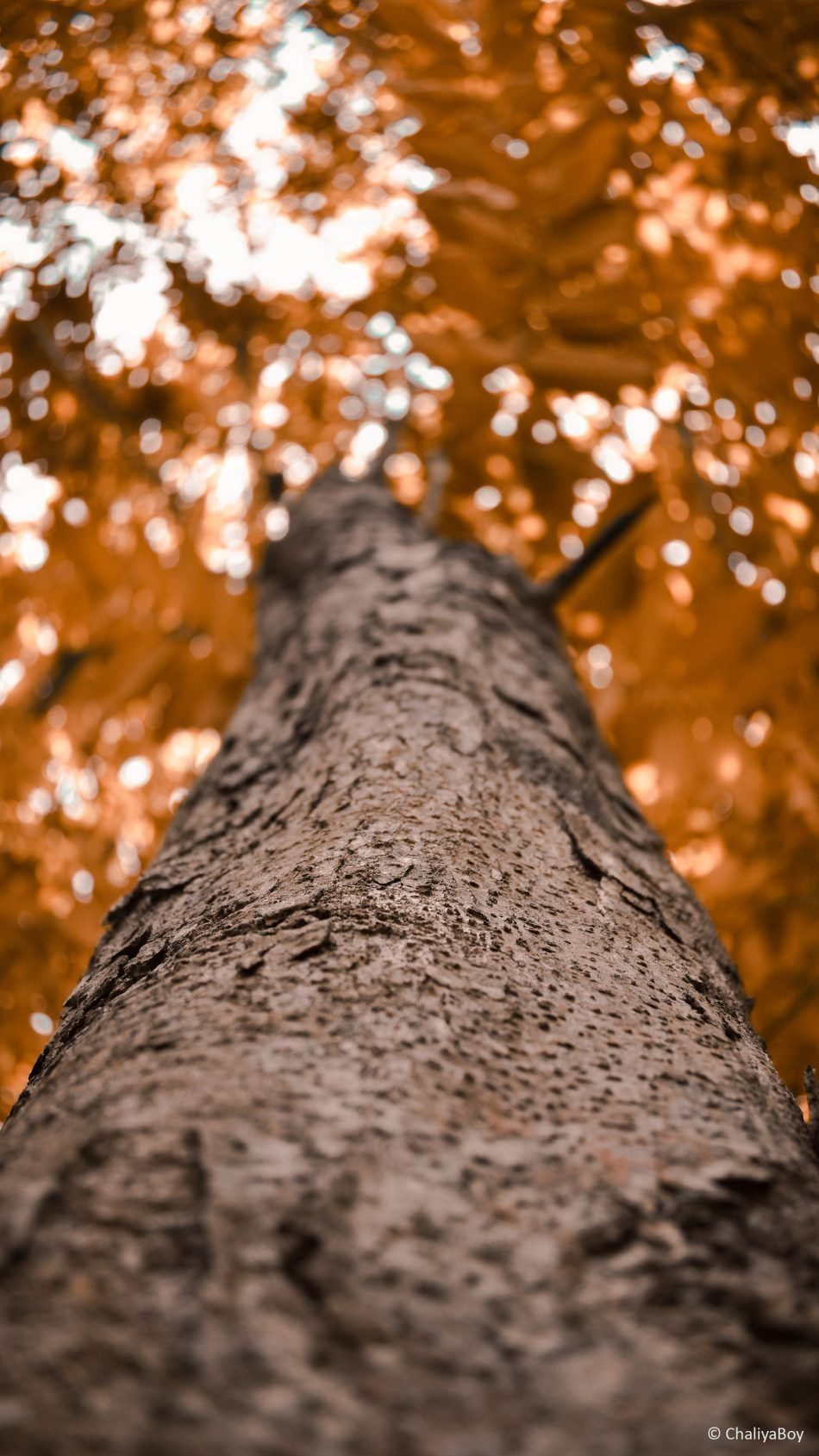 Tree Looking Up Photography 4k Ultra Hd Mobile Wallpaper Photography 4k Photography Wallpaper Photography
