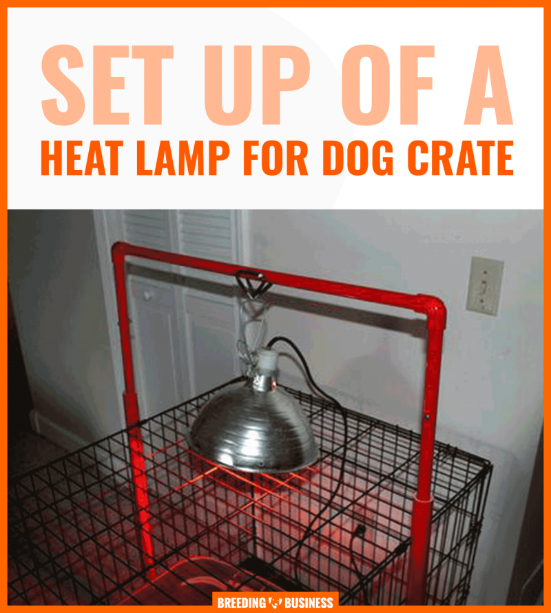 Heat Lamps For Dogs Buying Guide Reviews Faq Dog House