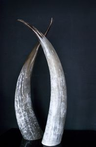 Pair of Ankole Cow Horns make a great table display or home sculpture. This is now in our Bristol Dig Haüshizzle store. #interiors #design #naturalartefact