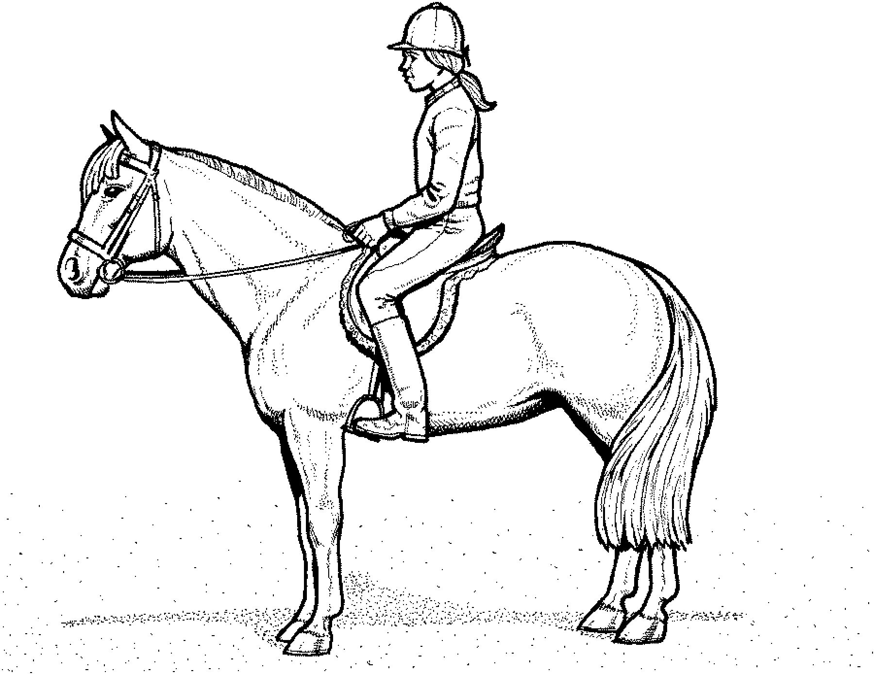 Ausmalbilder Pferde Mit Reiterin Ausmalbilder Pferde Kostenlos Zum