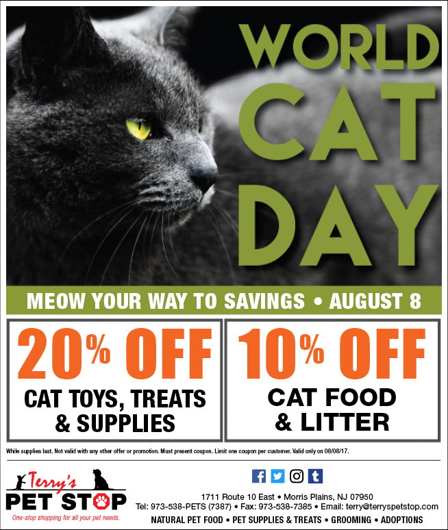 Today Is World Cat Day According To Cats Every Day Should Be About Celebrating Cats So Give Your Cat An World Cat Day International Cat Day National Cat Day
