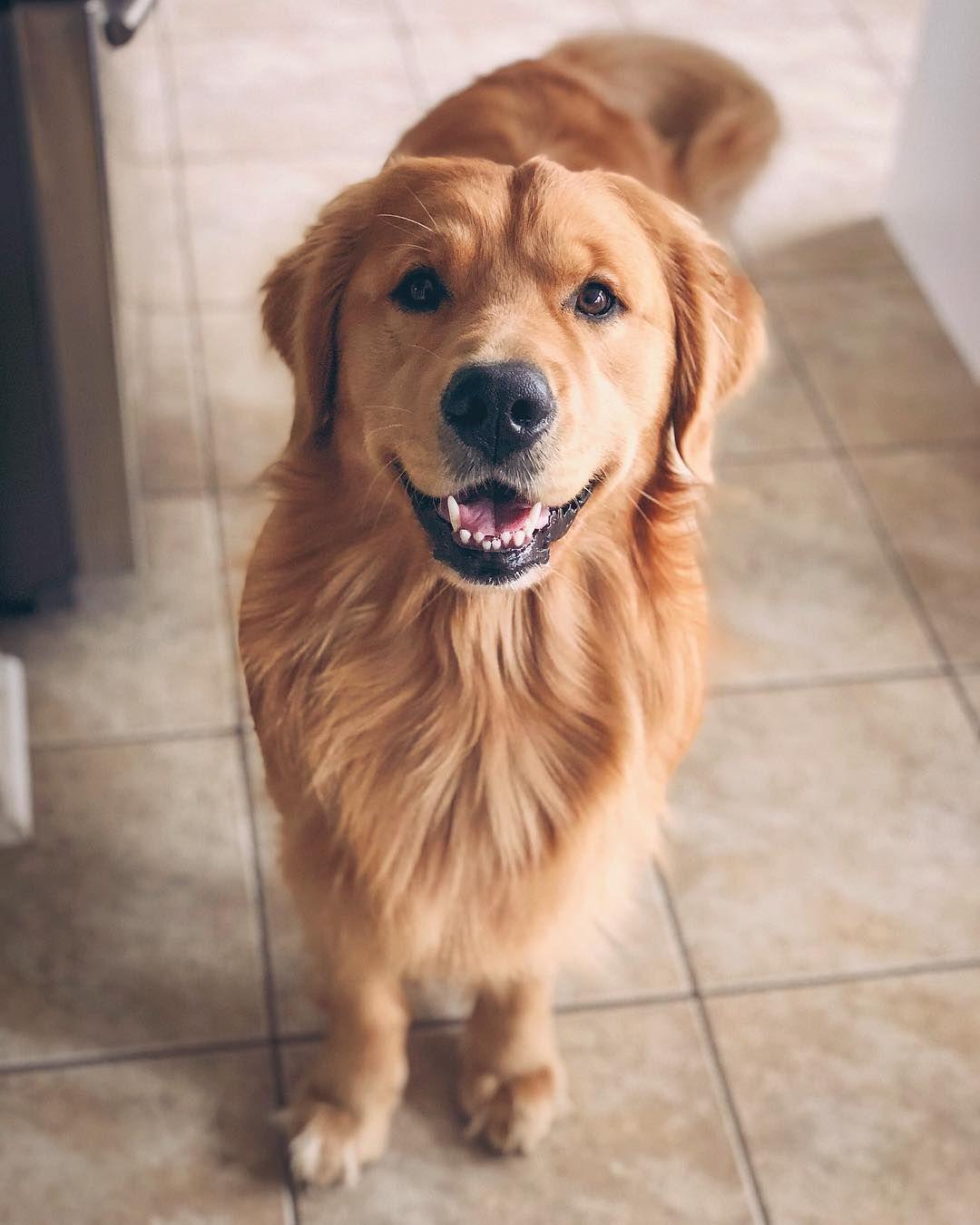 Jaxson Dog Activities Dogs Dogs Puppies