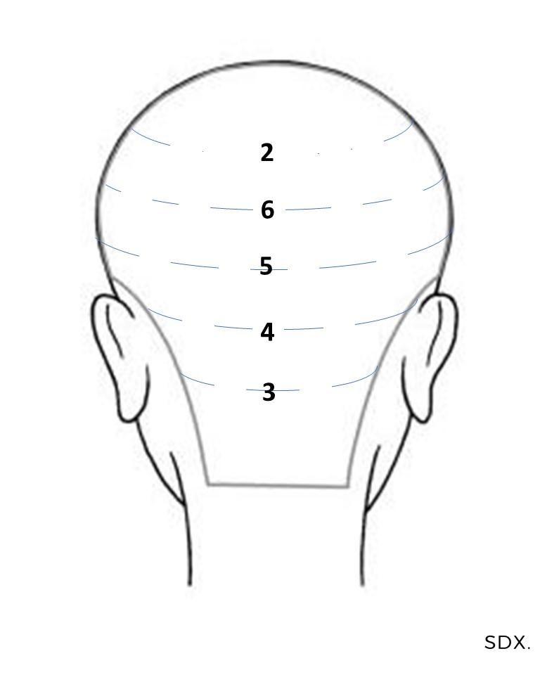 How To: Tape in Hair Extensions head map guide for ...