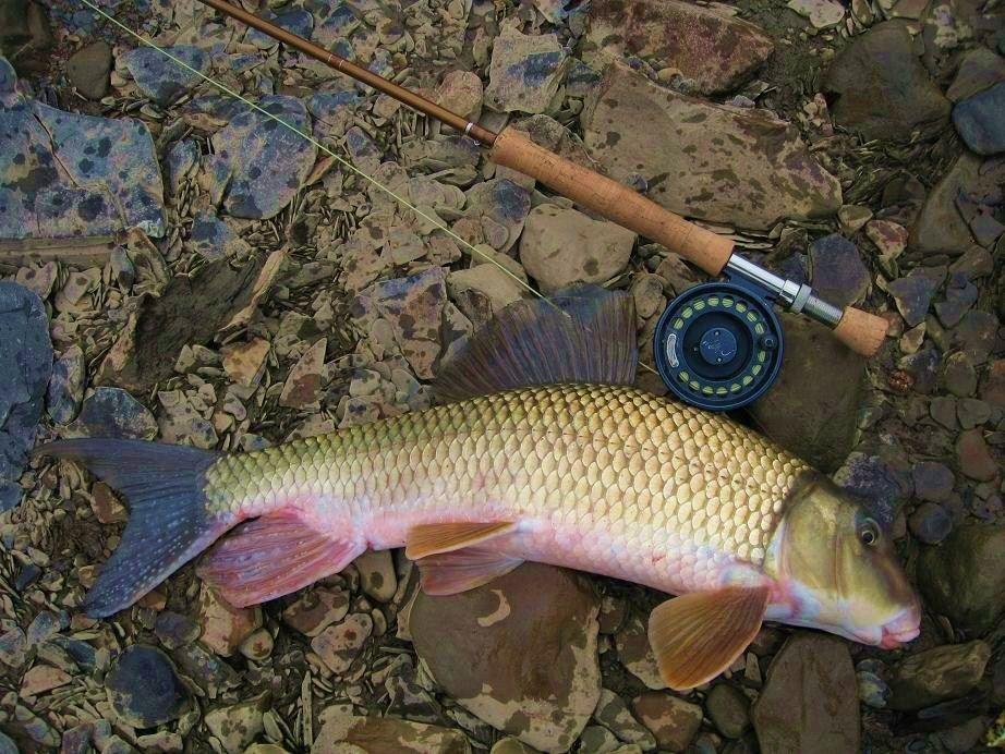 Hillbilly Bonefish Vermilion River Fishing Adventure River