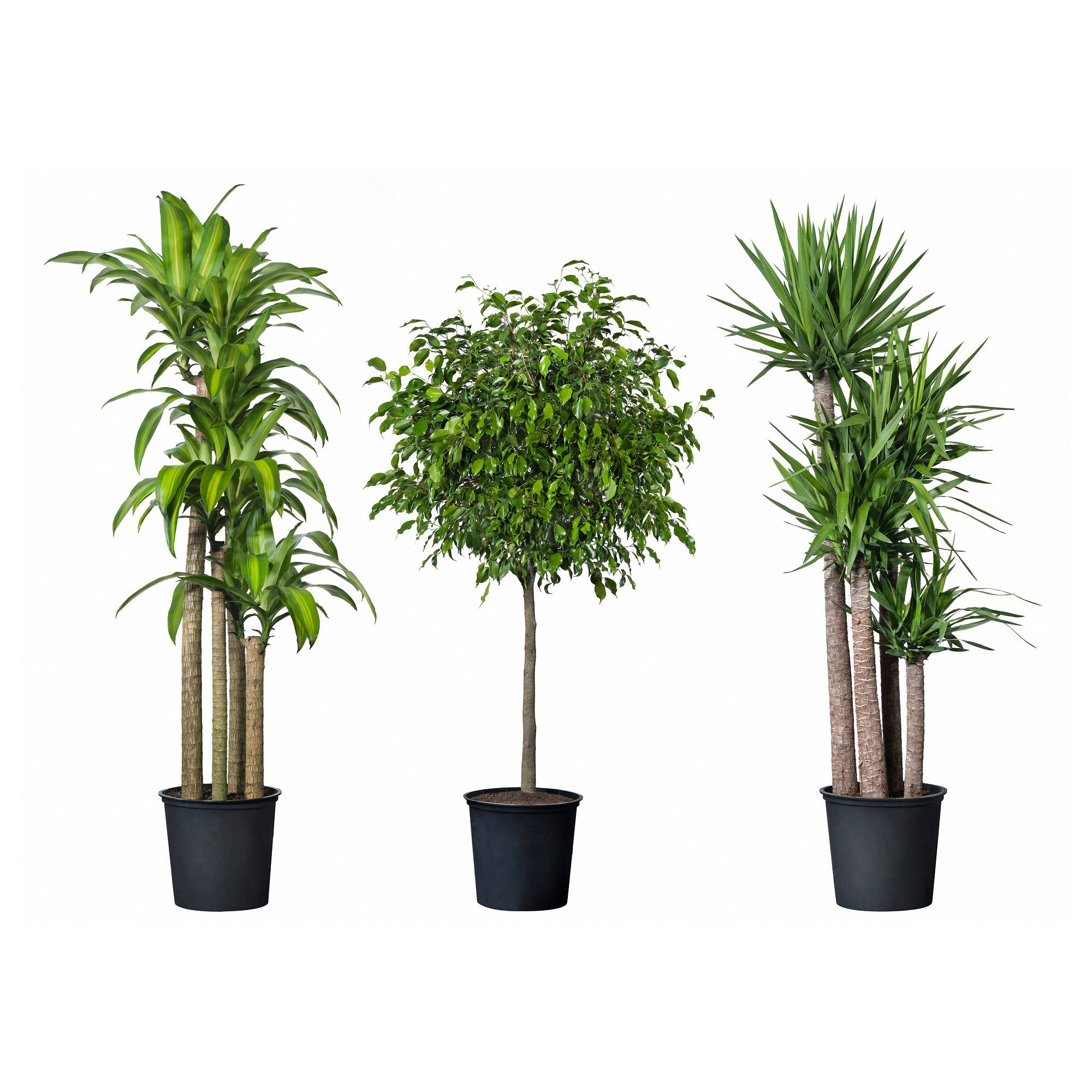Tropisk Potted Plant Tropical Orted Species Plants Tall Indoor