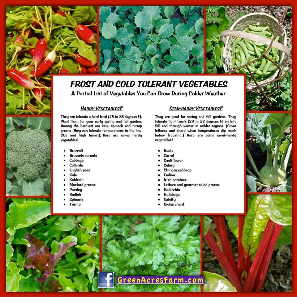Frost Cold Tolerant Vegetables Vegetables Herbs Growing 400 x 300