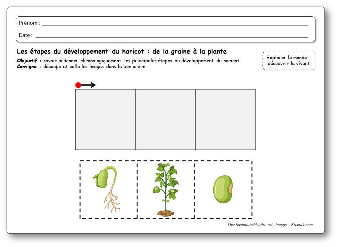 Images Sequentielles De La Graine A La Plante De Haricot