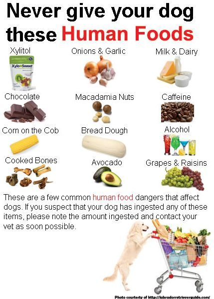 Veterinarians Issue Warning About Sugar Substitute That Can Be Deadly To Dogs Human Food Dog Food Recipes Human Food For Dogs