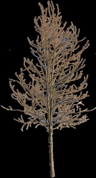 Deciduous Tree Winter Iv Tree Photoshop Winter Trees Deciduous Trees
