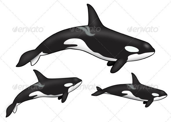 Pin on Inkspiration |Pod Of Orcas Drawing