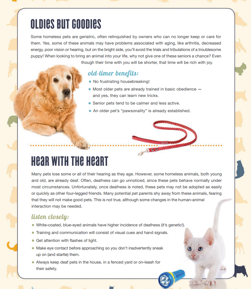 Tips For Adopting A Senior Or Special Needs Pet They Deserve