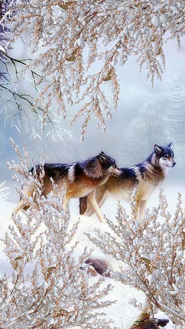 Wolfs in winter. - Snow